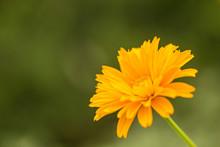 Beautiful Yellow Flower Coreo...