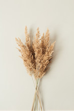 Reeds Foliage Branches Bouquet On Neutral Pastel Beige Background. Flat Lay, Top View Floral Design.