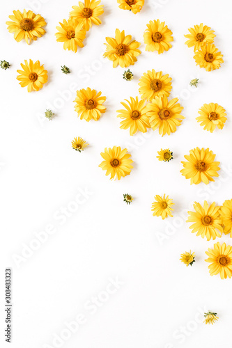 Floral composition with yellow daisy flower buds on white background. Flatlay, top view.