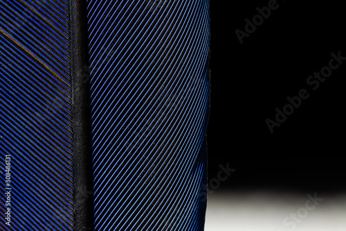 Photo penas de arara canindé azul em close