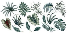 Tropical Vintage Palm Leaves Floral Clip Art. Exotic Botanical Print.