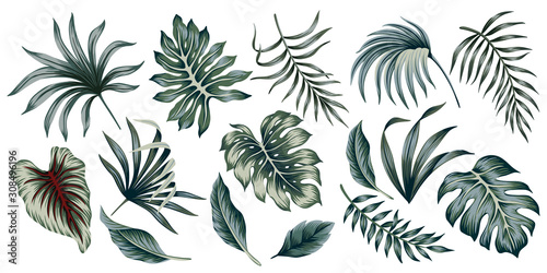 Obraz Tropical vintage palm leaves floral clip art. Exotic botanical print. - fototapety do salonu