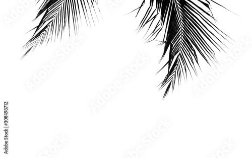 palms leaf on white background