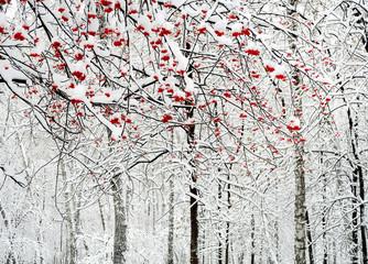 Panel Szklany Zima Rowan Berries in the Snow