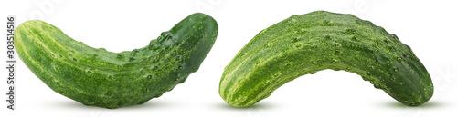 Fototapeta Two fresh cucumber obraz