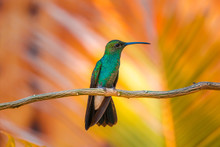 Hummingbird Flying En The Forest