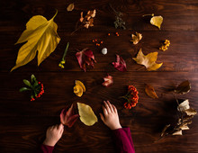 Collection Of Fall Autumn Leaves On Wooden Table With Child's Hands
