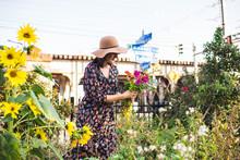 Woman In Urban Garden Picking ...