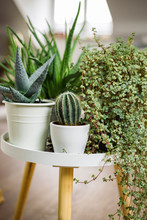 Plants In Pots Standing On Table