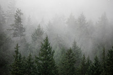 Fog Rises Out Of A Forested Hi...