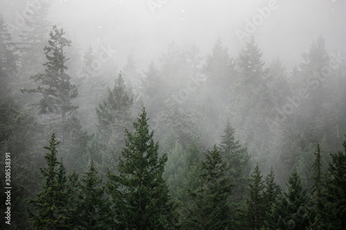 Fog rises out of a forested hillside on a summer morning in Canada. - 308538391