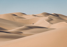 Sand Dunes With A Lone Bush In...