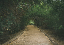 Overgrown Path In The Park At ...