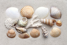 Sea Shells And Coral On The Sand