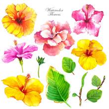 Hibiscus Watercolor Illustrati...