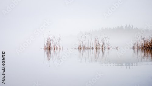 Reeds waving in the wind on a misty morning at Lake Littoinen, Kaarina, Finland Wallpaper Mural