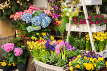 Beautiful Blossoming Flowers In A Flower Shop. Springtime Sale Of Fresh Flowers.