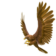 Deepsea Eagle Hunting On White...