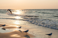 Sunset On The Baltic Sea With Seagulls. Summer Time. Golden Hour