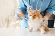 Female veterinarian vaccinating cute cat in clinic