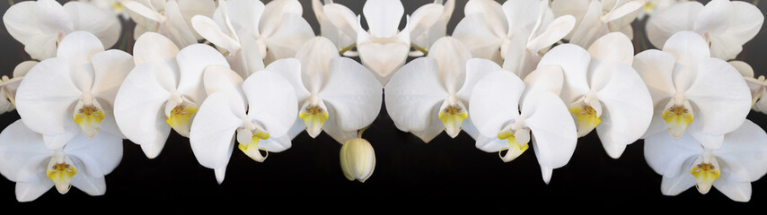 Panel Szklany Nowoczesny Beautiful white orchids isolated on black background panorama banner long