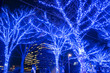 Leinwanddruck Bild - Trees illuminated with blue lights during holiday season, Shibuya, Tokyo 青の洞窟イルミネーション 渋谷