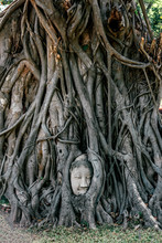 Vertical Shot Of Buddha Statue Entwined By Roots Of Spiritual Tree. Asia, Tourism, Adventures Concept.