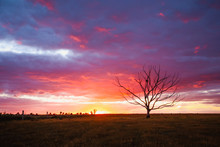 Silhouette Of Majestic Dead Tree In A Field With A Vibrant Sunset Present In The Background