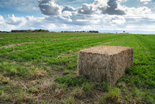 Large Hay Square Bail In A Gre...