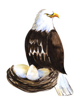 Big Bird Of Prey. Large Bald Eagle On A Nest With Eggs. Maternity Of Predators. Hand Drawn Watercolor Sketch Illustration On White.