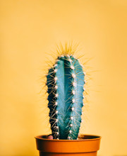 Green Cactus In Decor Pot Over...