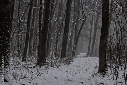Obraz Winter Wald - fototapety do salonu