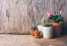 Various Cactus And Succulent Plant In Clay Pot On Vintage Wooden Background. Houseplant Growing Hobby And Spring Gardening At Home.