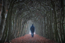 A Man Walking In A Tunnel Of Trees On An Hazy Day In Autumn.