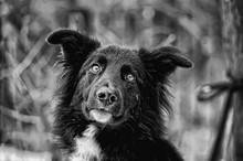 Black And White Dog Mongrel On...