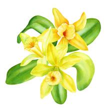 Bouquet Of Vanilla Flowers On ...