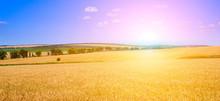 Golden Sunset Over Wheat Field...