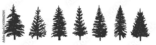 Fototapeta silhouettes of spruce. Vector graphics. hand drawing. Eps obraz