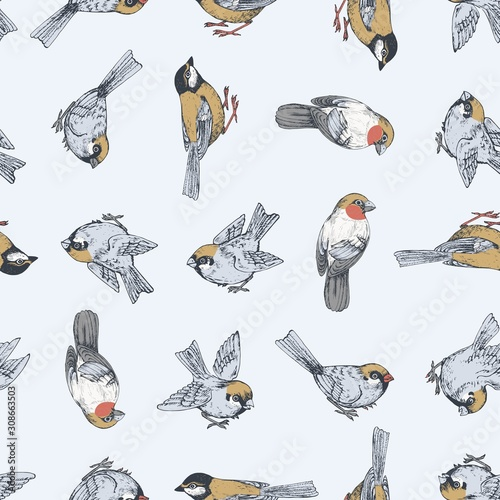 Fotografiet Seamless vector pattern with sparrow, tit, bullfinch