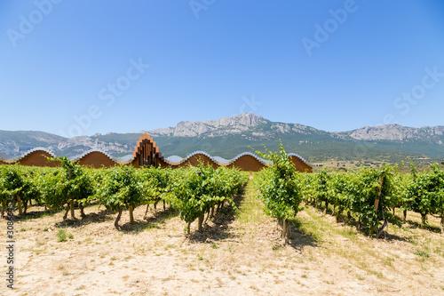 Laguardia, Spain. Vineyard and winery Bodega Ysios