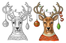 Deer With Christmas Garland Dressed In Sweater. Vintage Color Engraving