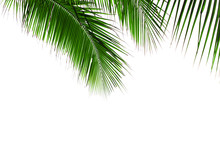 Green Palm Leaves Isolated On ...
