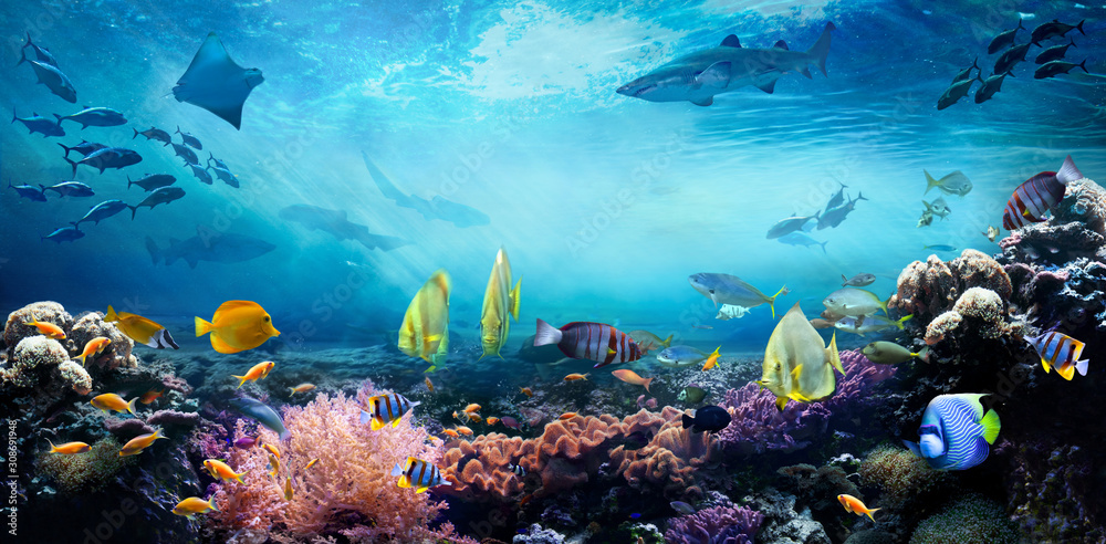 Fototapeta Underwater sea world. Life in a coral reef. Colorful tropical fish. Ecosystem.