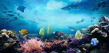 Underwater Sea World. Life In ...