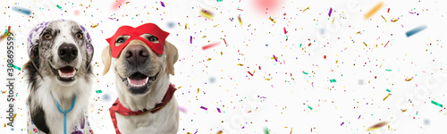 plakat Banner two dogs celebrating carnival, halloween, new year dressed as a veterinarian and hero with red mask, cape costume. Isolated on white background with confetti falling