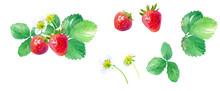 イチゴの水彩イラスト、花、葉、果実のパーツセット