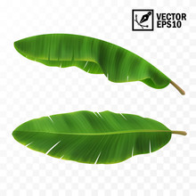 3d Realistic Vector Green Fresh Leaves With Banana Or Palm Trees, Top View, Side View