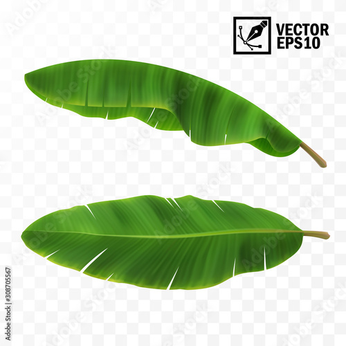 Tableau sur Toile 3d realistic vector green fresh leaves with banana or palm trees, top view, side