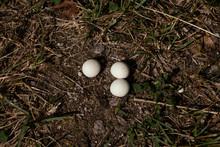 Three Small Puffball Mushrooms...