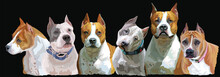 American Staffordshire Vector Group Of Dogs